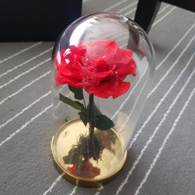 Beauty and the beast immortal rose Valentine's Day
