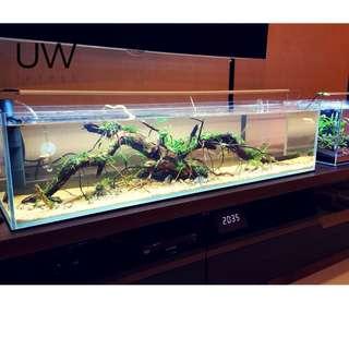 """Aquascape Concept - """"Mini Amazon Jungle"""""""