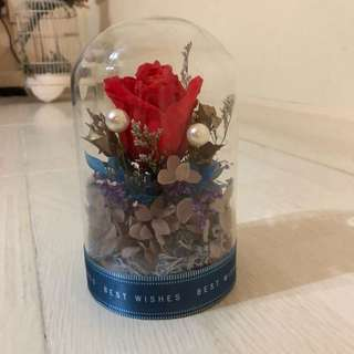 Valentine's Day gifts  [Preserved roses in a jar / preserved flowers in a jar]