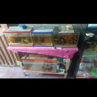 Aquarium wuth fish and complete package