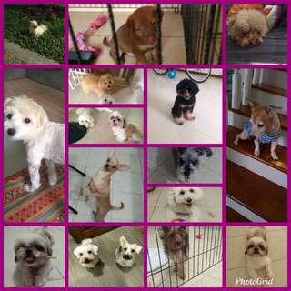 Dog boardings / Day care services for dogs