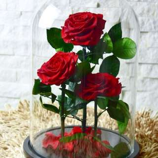 Beauty and the Beast Inspired Preserved Rose