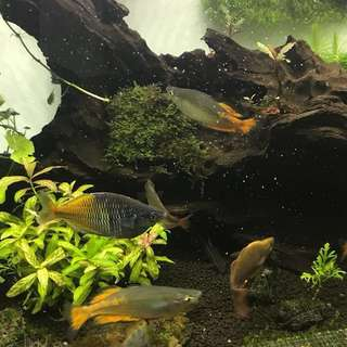 Reducing bio load, Driftwood Sale. Free sand, pail for fish