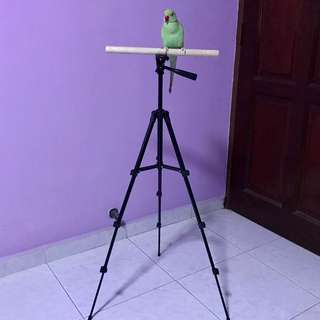 Bird tripod stand 🔥