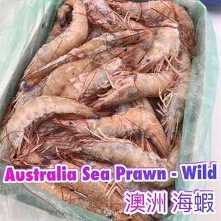 澳洲 海蝦 (斤)約15隻