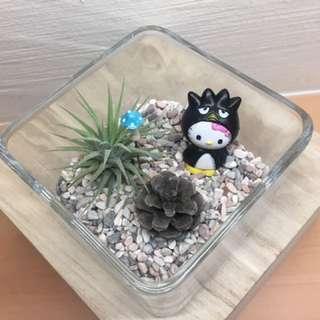 Valentine Hello Kitty Airplant Terrarium