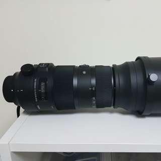 Sigma 150-600 Sport (canon)