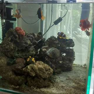 Aquarium air laut tebal