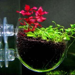 Aquarium Glass Bowl