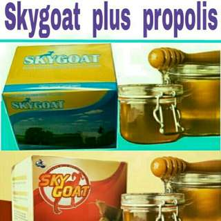 Skygoat plus propolis 10 kotak