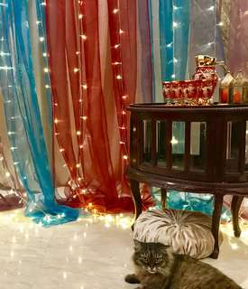 Rental of Backdrop Stand / Curtains / Lightings for Dessert Table Corner & Themed Party