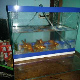 Aquarium with air pump