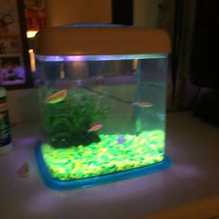 Fish tank with free fish and food