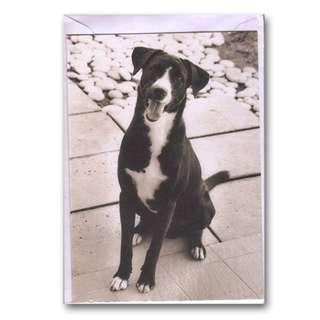 🚚 SPCA Doggie Greeting Card