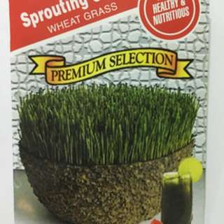 Wheat grass for cats or for  drinks