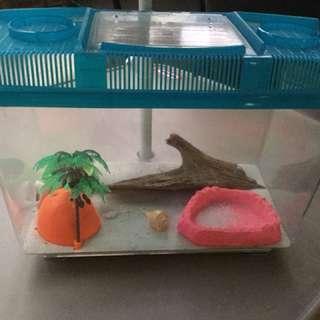 Crazy crab homeb