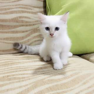 Kitty For Sell