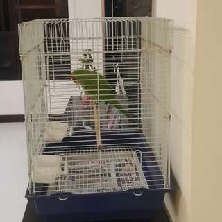 Bird cage for sales