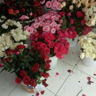 Mawar Asli Hari Kasih Sayan Valday Valentine  Order Gosend