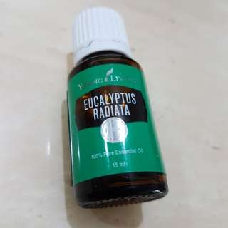 Young Living Eucalyptus Radiata 15ml