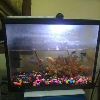 Aquarium + Ikannya dan kerang