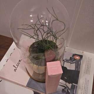 Lip coat papermint pink