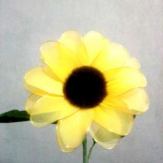 Stocking sunflower