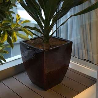Potted Plants for Patio/Balcony