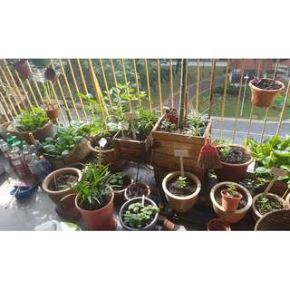 plants for sale (various)