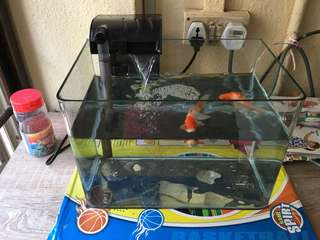 Fish tank with gold fishes