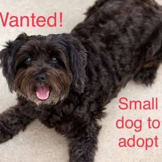 Wanted: small dog to adopt