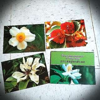 Flora 香港嘉道理農場植物明信片 plant postcard
