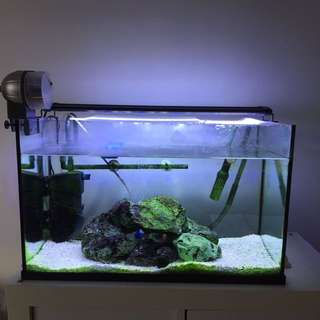 2ft Fish Tank w canister & shelving