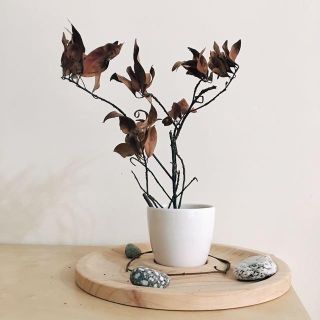 室內空間擺設 居家擺設 大自然擺件 裝飾 天然裝飾品