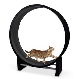 Cat Exercise Wheel - Brand New