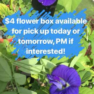 Edible flower box for food
