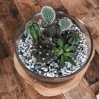 Succulent and Cactus Terrarium