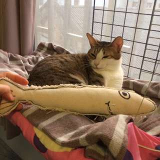 貓草踢踢枕 魚型貓玩具 手工製棉麻材質