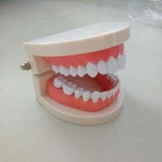 Teething model