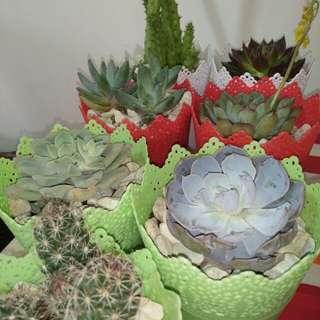 Cactus / Succulents 🌵