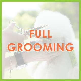 Low Stress Mobile Dog Grooming - Low-Stress, SKC Award-Winning Full Dog Grooming by Pawrus Pet Grooming Studio