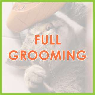Low Stress Mobile Cat Grooming - Low-Stress, SKC Award-Winning Full Cat Grooming by Pawrus Pet Grooming Studio