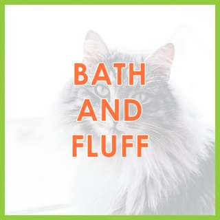Low Stress Mobile Cat Grooming - Low-Stress, SKC Award-Winning Bath and Fluff Cat Grooming by Pawrus Pet Grooming Studio