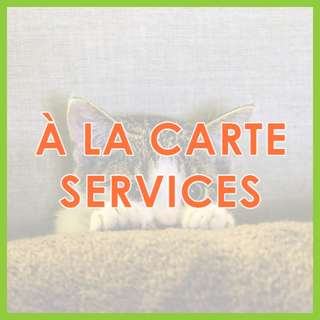 Low Stress Mobile Cat Grooming - Low-Stress, SKC Award-Winning Ala Carte Cat Grooming by Pawrus Pet Grooming Studio