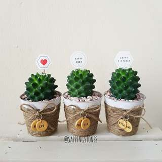 Cactus in Personalised Pot