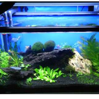 Almost new 2 feet glass fish tank with light and customised acrylic cover + many accessories