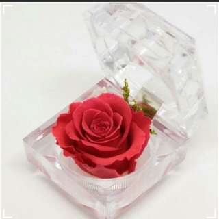 Preserved Rose Red