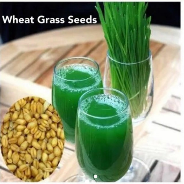Wheat Grass Seeds