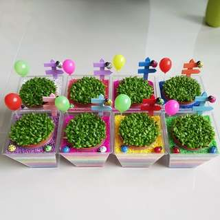 Happy plant for office & gift
