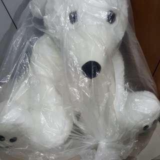 Paws bear